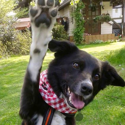 Hofhund Lara