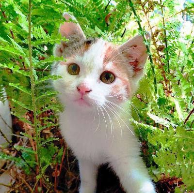 Katze Svea